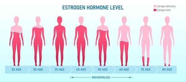 oestrogeen niveau vrouw